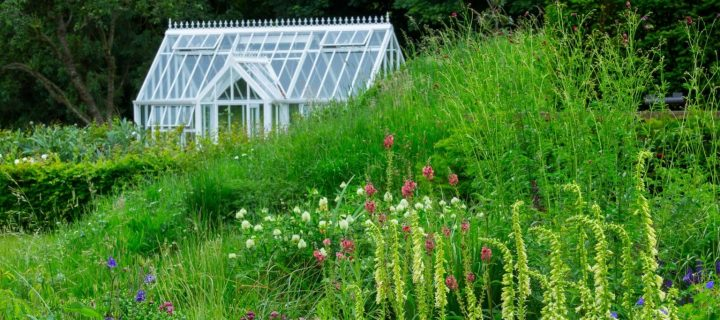 greenhouse with wild flowers
